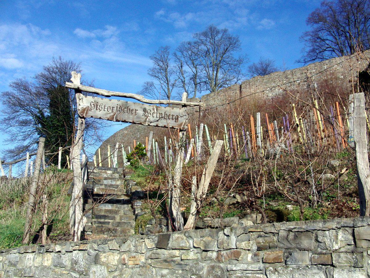 Wein ist ein Kulturgut – Arnsberger Schlossfenster nimmt 750 Jahre Wein und seinen Anbau unter die Lupe